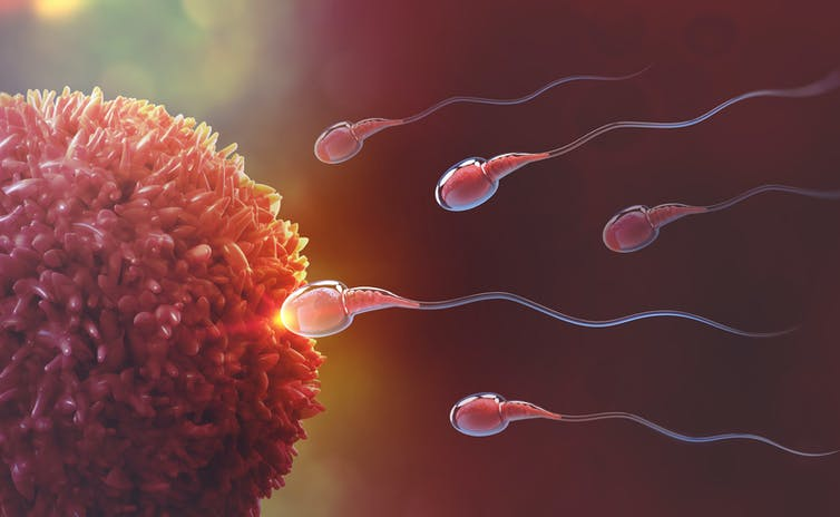 mužská plodnosť